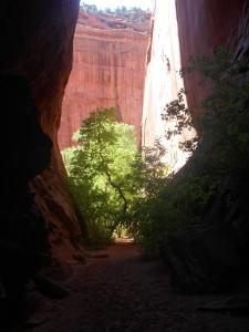 Short slot canyon off Burr Trail.